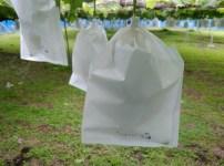 【ブドウの袋かけ】袋かけの時期·袋かけをする理由·ブドウの袋の種類を解説 95