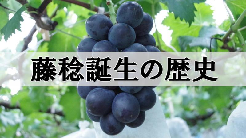 藤稔(ふじみのり)誕生の歴史 13