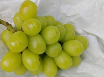 ブドウ かすり症