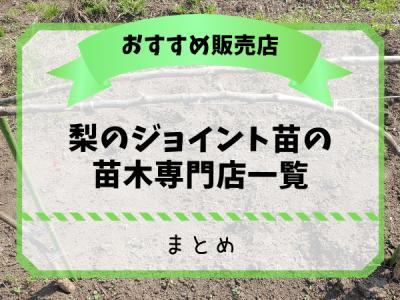 梨のジョイント苗の苗木専門店一覧【まとめ】 31