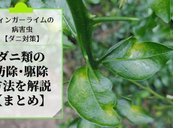 フィンガーライムにつく病害虫のダニ類の防除・農薬・駆除方法を解説【まとめ】 226