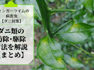 フィンガーライムにつく病害虫のダニ類の防除・農薬・駆除方法を解説【まとめ】 34