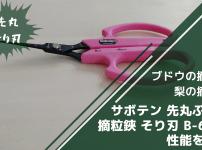 サボテン 先丸ぶどう摘粒鋏 そり刃 B-6Mの性能・使い方・評判を解説【ブドウの摘粒に】 158