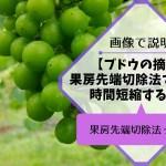 ブドウの果房先端切除法で摘粒時間を短縮する方法 35