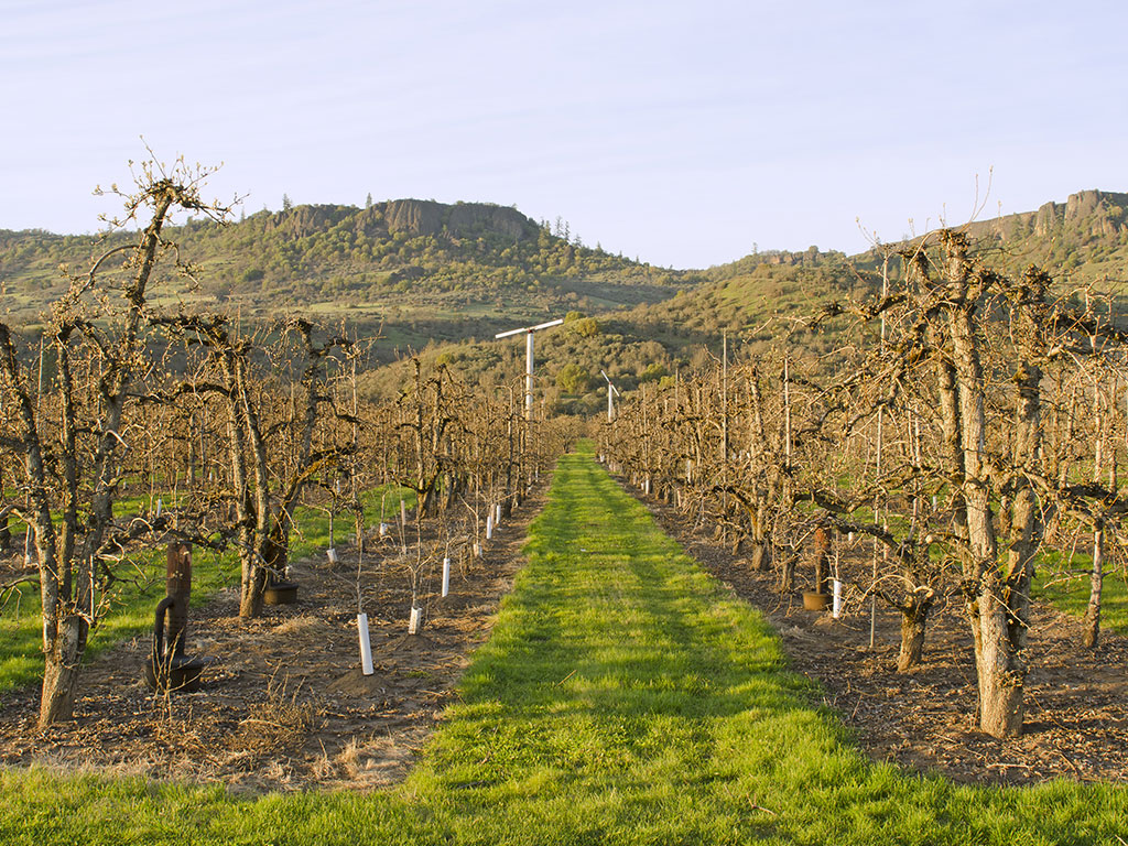 A Brief Overview Of The Rogue Valley Ava In Oregon ...