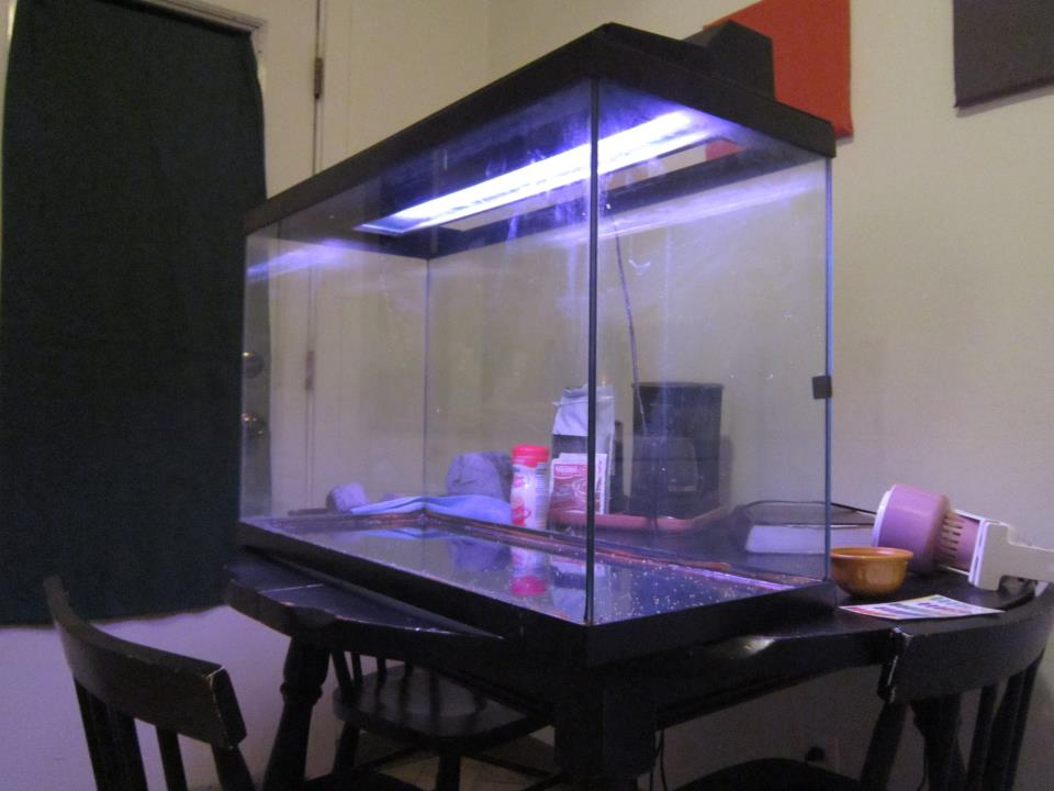 kitchen cabinet materials tommy bahama table aquarium project part 2: building an stand ...
