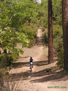 The Team Big Bear ride covered forest road 2N10 and trails in Moonridge.