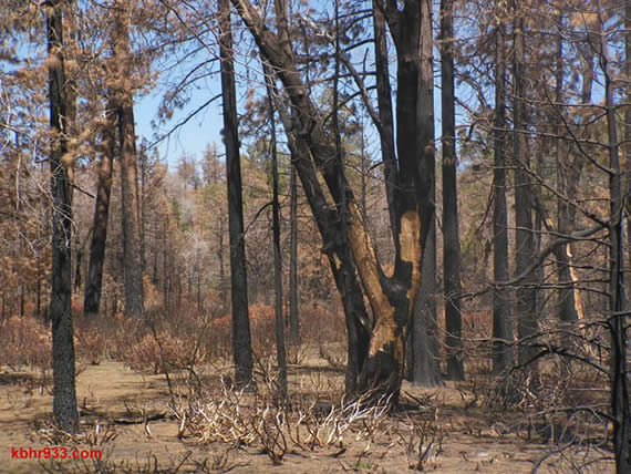 One year later (in 2008), the forest is still scarred from the Butler #2 Fire. This Saturday's Public Lands Day will involve replanting in these burn areas.