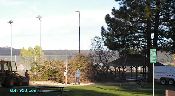 The popular poplar, a fixture at Meadow Park for 70 or so years, was cut down this morning.