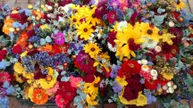Arnold Farm flowers.