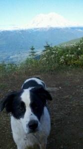lucky-dog