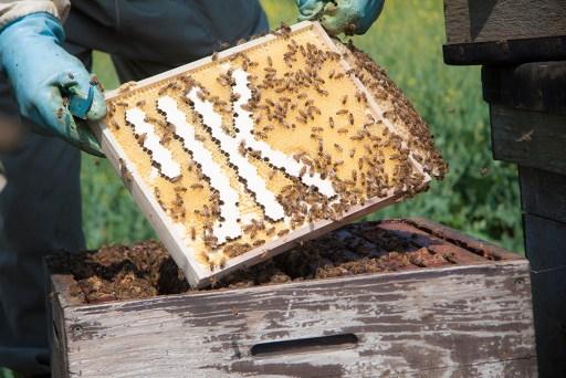Bijen-bouwen-wegwijzers