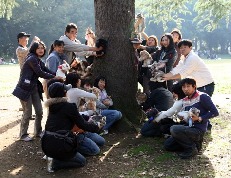 Rabbit owners posing with their rabbits in front of a Ginkgo tree, Yoyogi park, Tokyo, 2010