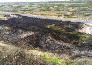 "About two acres of beach grass and scrub brush were blackened late Tuesday night in what officials are calling a ""human caused"" fire along South Jetty Road (Contributed photo)."