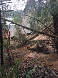 Mud, rocks and trees slammed into the back of two homes above Mercer Lake Road, two miles east of Highway 101, about 3 AM Friday, Dec. 18th. One woman and her dog were killed. A man and a second dog escaped. (Siuslaw Valley Fire and Rescue photo)