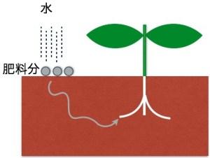 肥料吸収の仕組み1