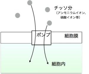 肥料吸収の仕組み2