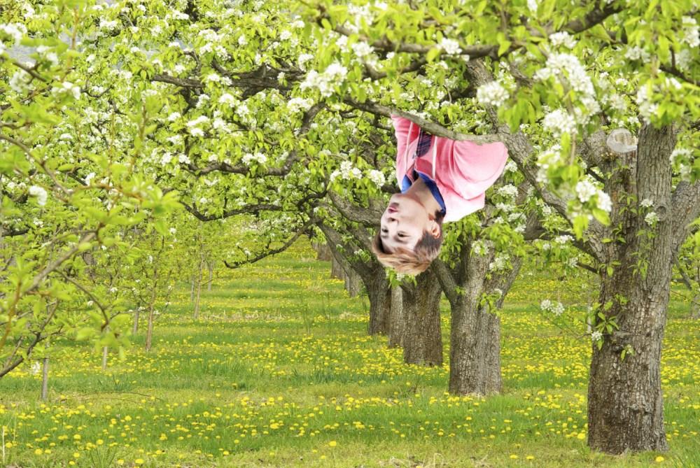 junsu-pear-tree-4