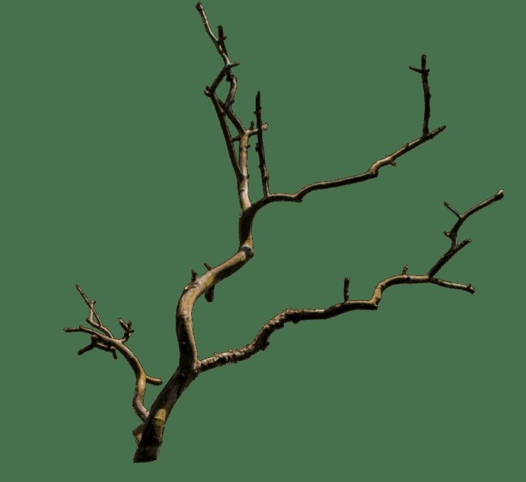 old_branch_png___by_welshdragonstocknart-d8tt7rf