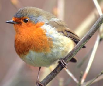 bird_-_24-12-2007