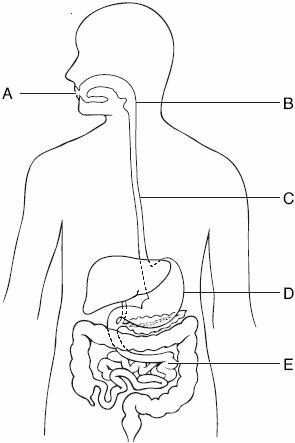 BIOLOGY DIAGRAMS * KCPE-KCSE