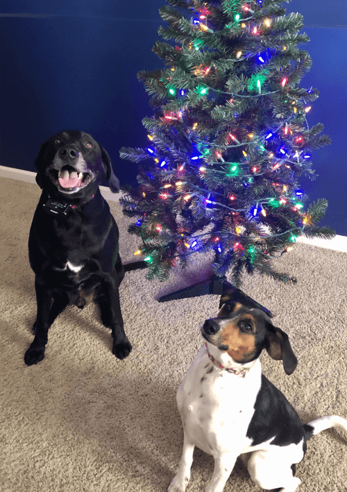 Patrick Fitzgerald + Christmas + dogs