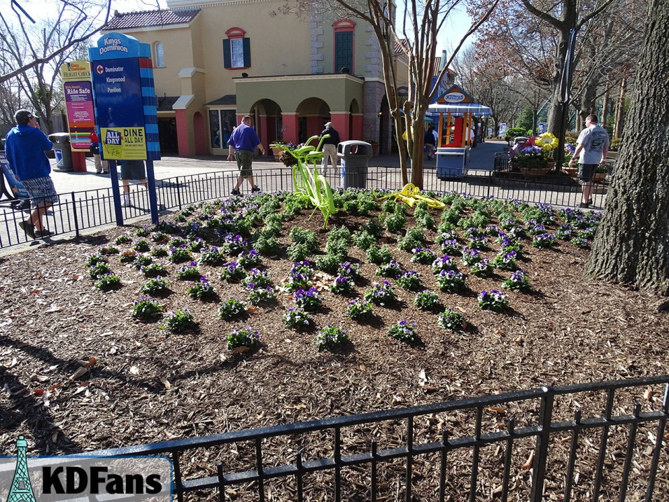 Some of the many new flowers planted around the park