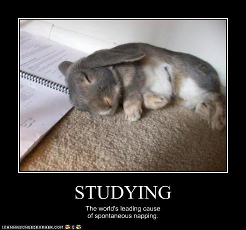 funny-pictures-bunny-naps-on-homework