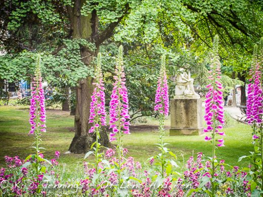 Paris Jardin Du Luxembourg In Bloom