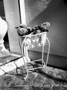 Flower Pots Froeschengasse Saarbruecken