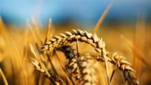 Румен Сейреков - Добруджа е земя на златното жито!