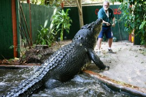 cassius the crocodile (5)