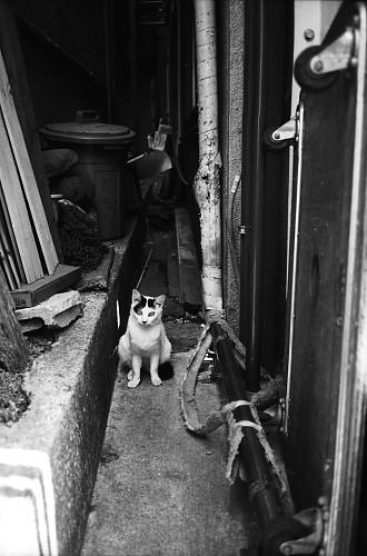 Tokyo Street Cat