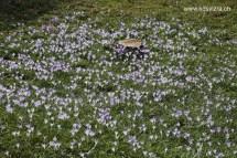 Rumput yang dihiasi bunga-bunga