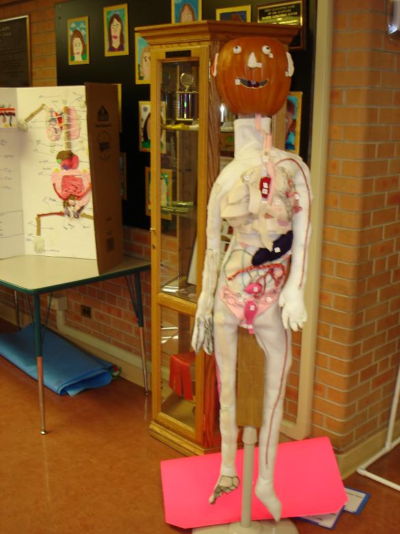 Human Body Project Examples  Mrs Du Houxs Science Classroom