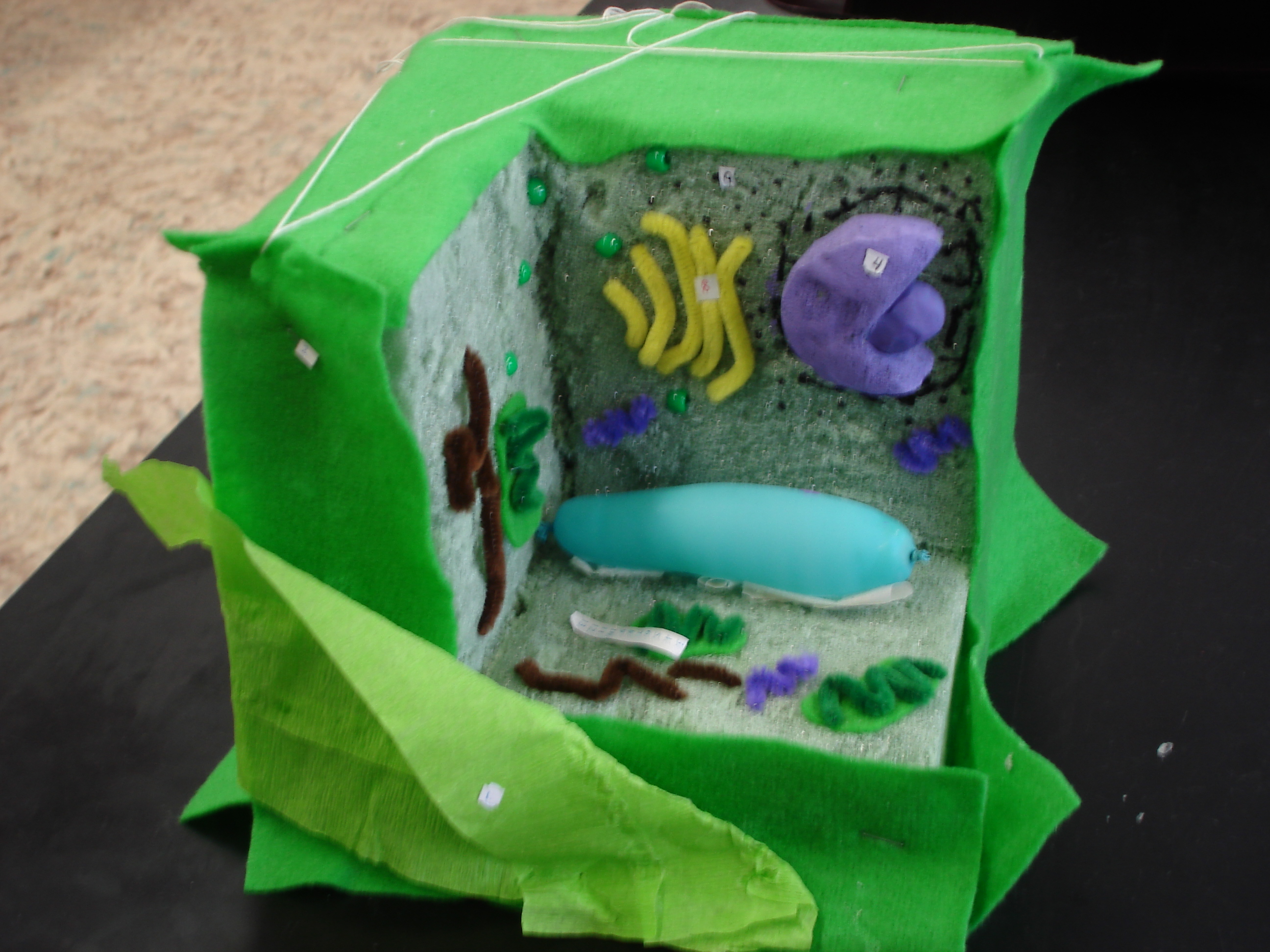 plant cell diagram project cat muscle anatomy january 2012 mrs du houx 39s science classroom page 4