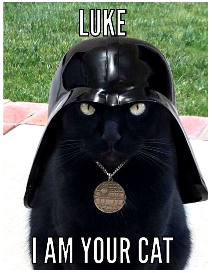 Star Wars cat memes rule!