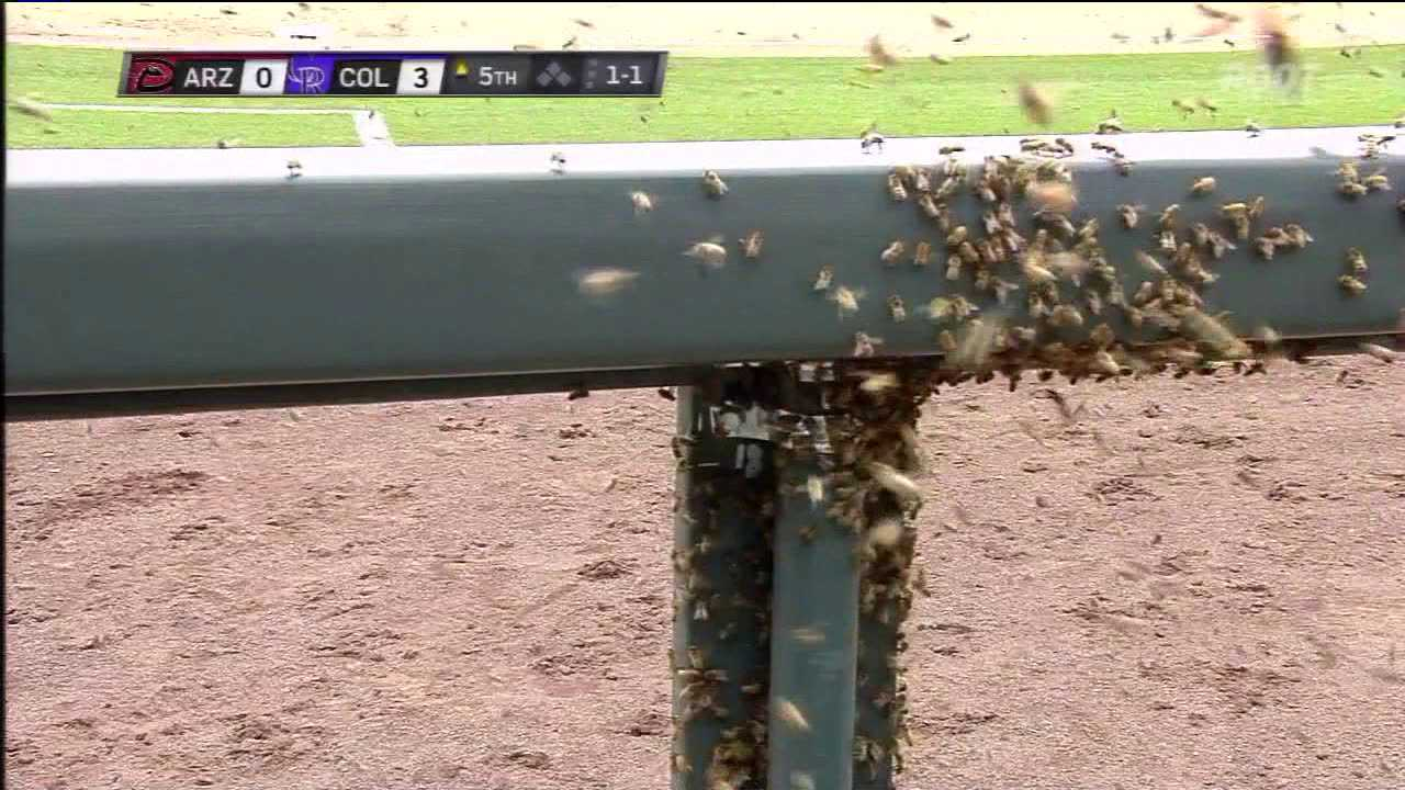 Bee swarm at Coors Field. Courtesy ROOT Sports. May 17, 2012.