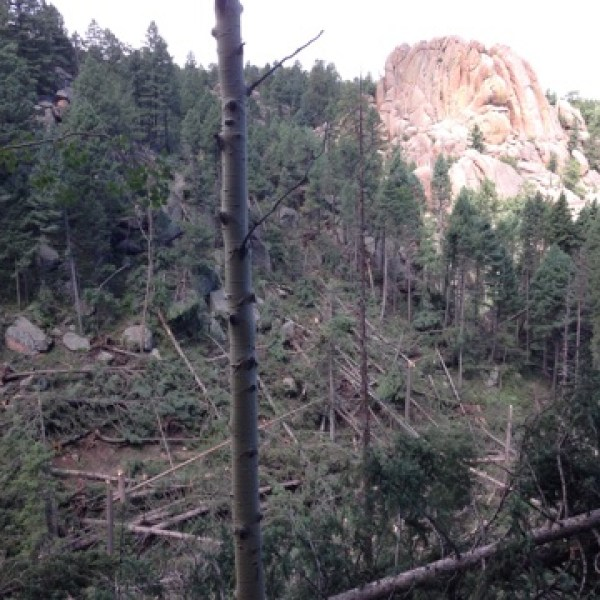 Damage from 'blowdown' in Devil's Head Fire Tower of Douglas County. Photo credit: U.S. Forest Service