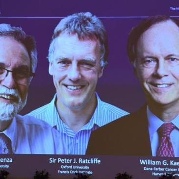 Three Hypoxia Researchers share the 2019 Nobel Prize in Medicine or Physiology
