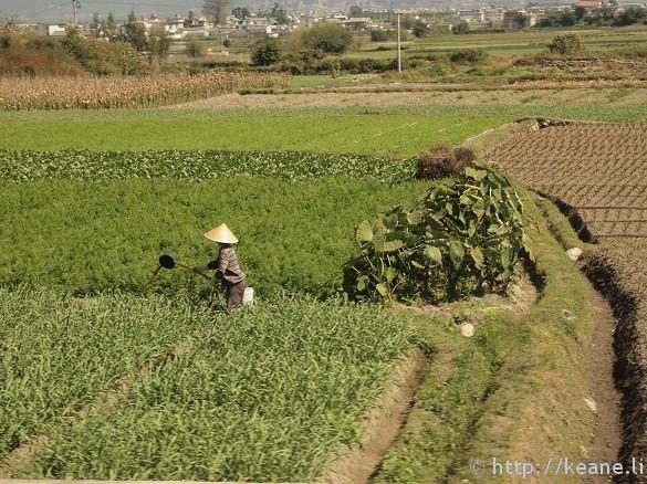 Farmer along the highway in Dali