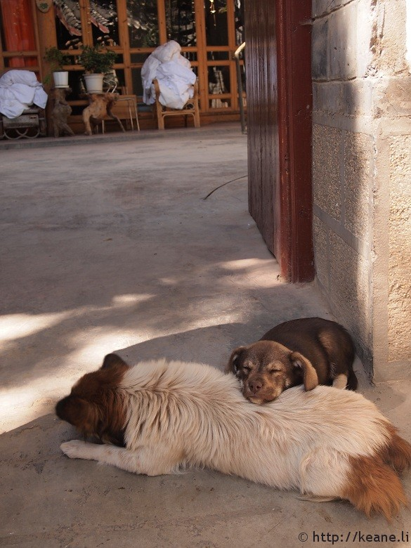 Two dogs lounging in Lijiang's Shu He Ancient City