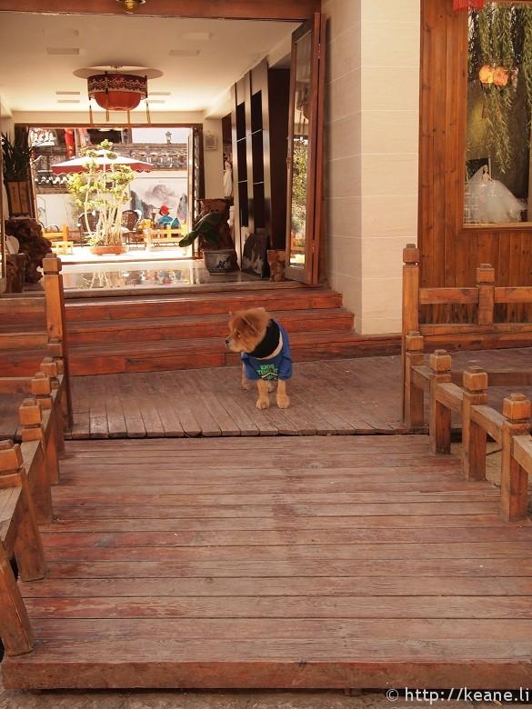 Cute fluffy dog in Shu He Ancient City in Lijiang