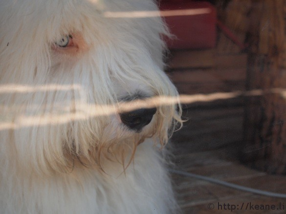 Fluffy dog with cool eyes in Lijiang Old Town