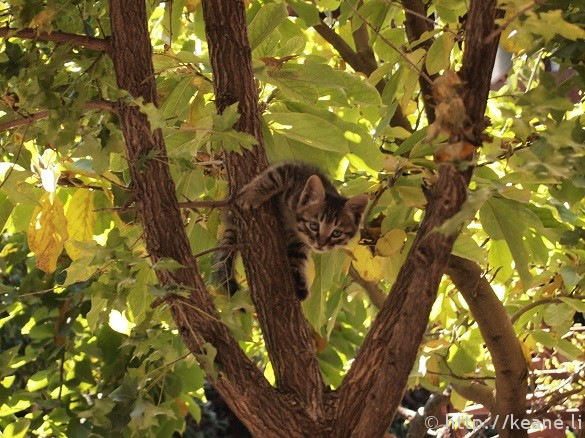 Kitten climbing in a tree in Shu He Ancient City in Lijiang