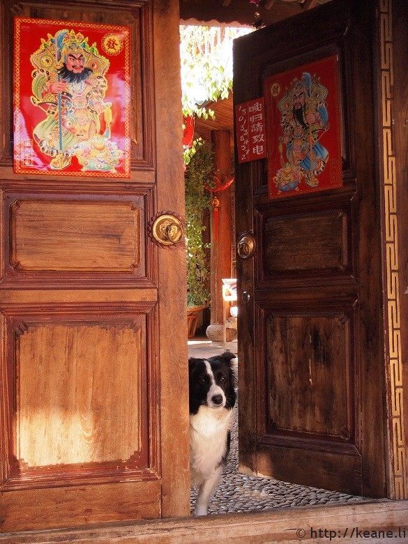 Dog peeking out a door in Lijiang Old Town