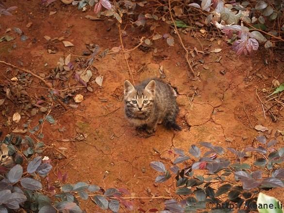 Cute kitten in Lijiang's Shu He Ancient City