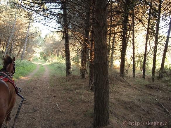 Foce Bevano in the Parco del Delta del Po in Savio, Emilia-Romagna