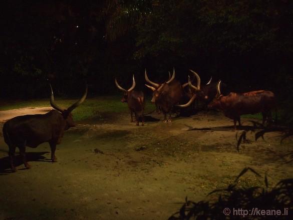 Singapore's Night Safari - Animals