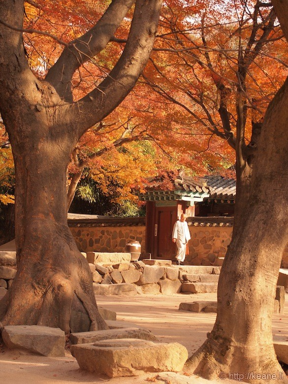 Monk in Gyeongju Temple Grounds